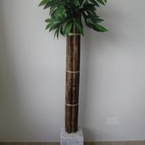 bambu-5